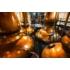 Kép 4/4 - The Dalmore 12 Éves  Single Malt Whisky - Mr. Alkohol